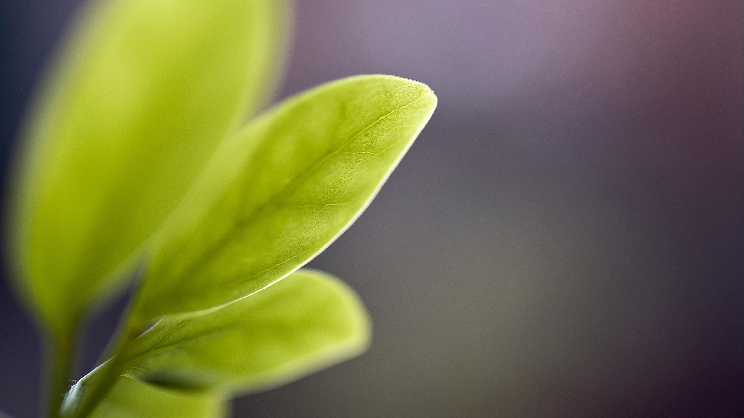 Cute Morning Hd Wallpaper Green Leaves Blur Wallpapers Hd Wallpapers Id 16678