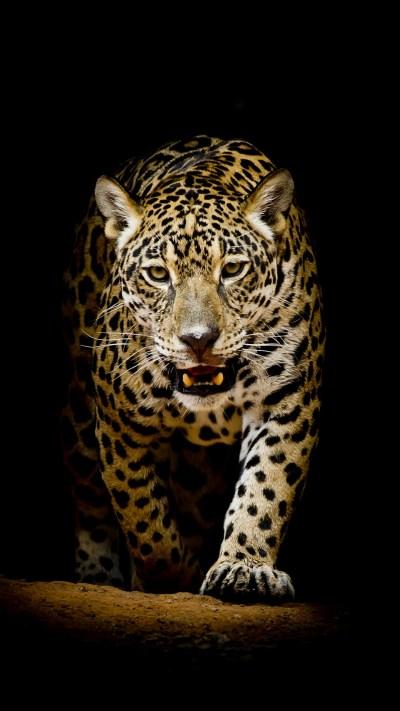 Leopard 4K HD Wallpapers | HD Wallpapers | ID #22564