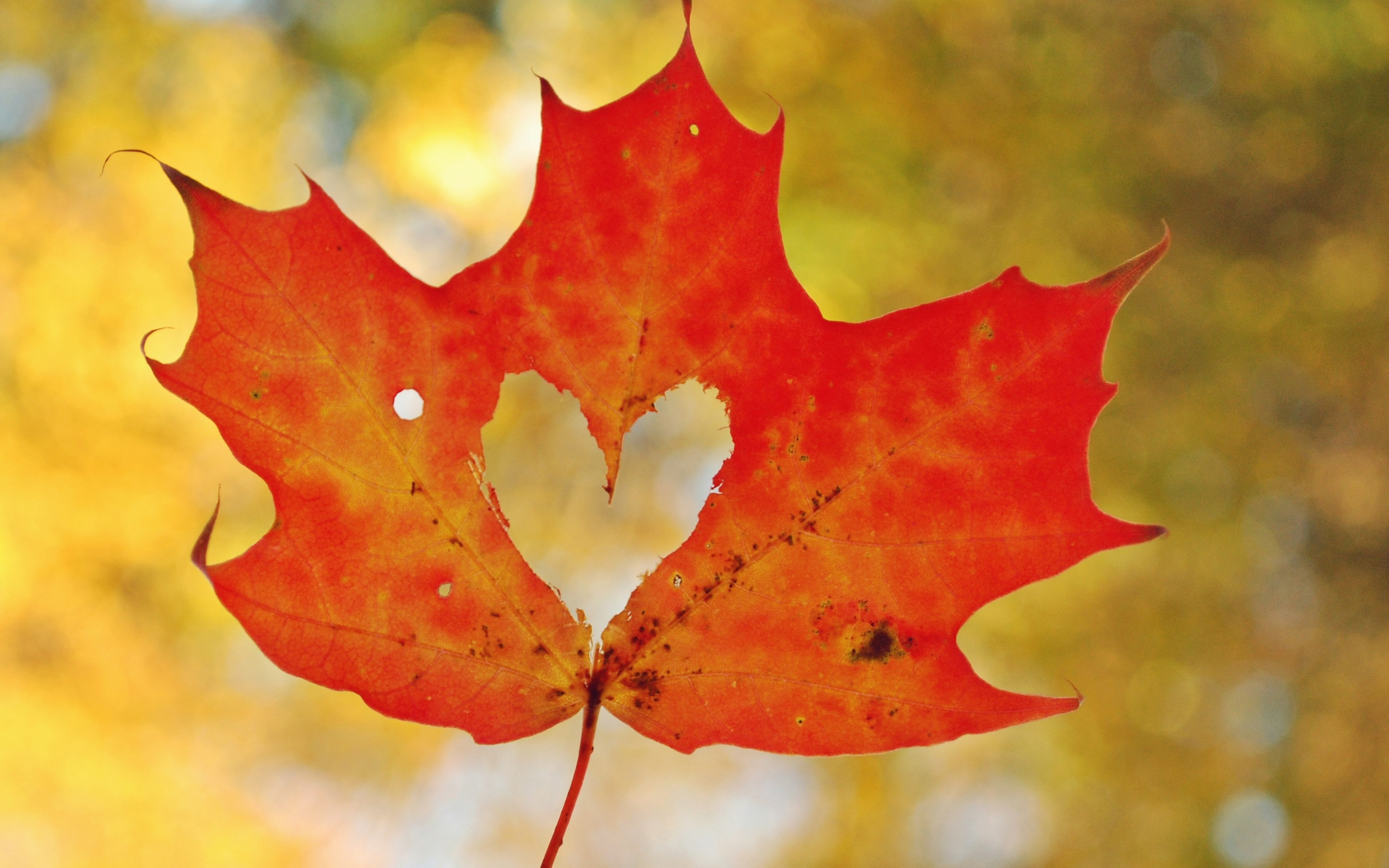 Fall Wallpaper For Computer Screen Love Heart Maple Leaf Wallpapers Hd Wallpapers Id 19483