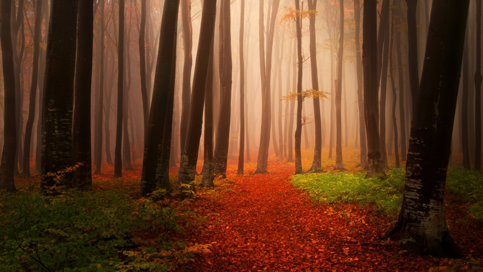 Creative Fall Wallpaper Misty Autumn Forest Wallpapers Hd Wallpapers Id 18992