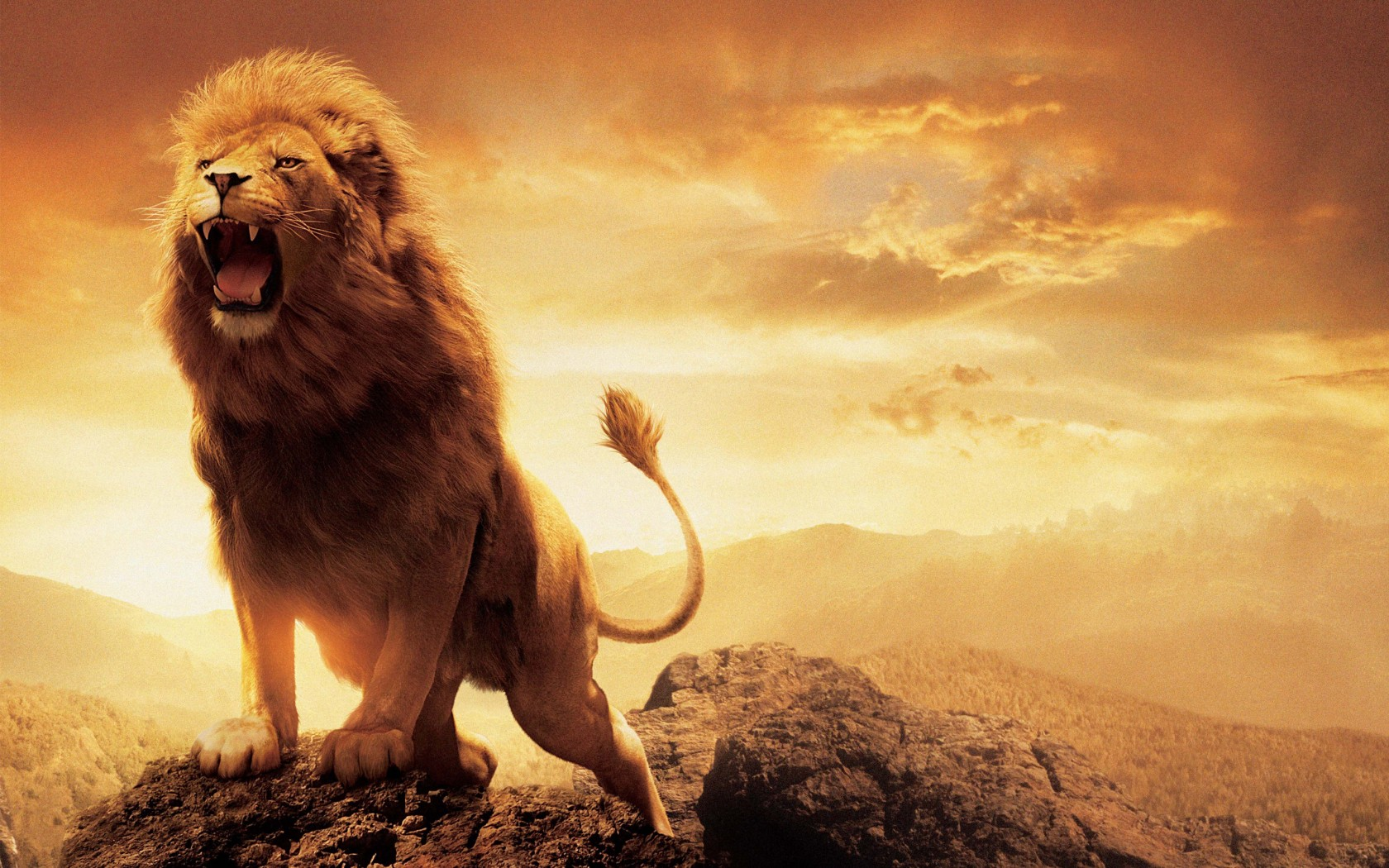 Cute Hd Wallpapers For Iphone 5 Narnia Lion Aslan Wallpapers Hd Wallpapers Id 15038