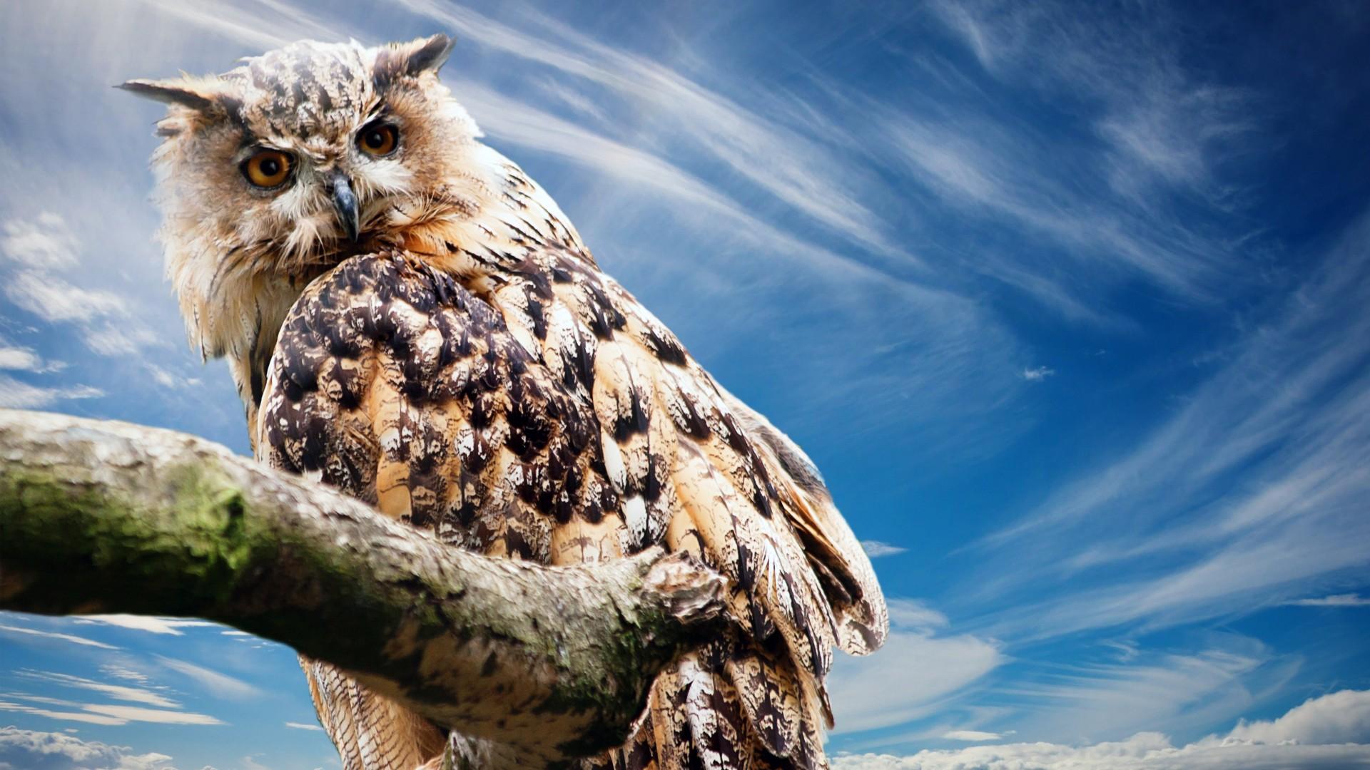 Cute Cheetah Wallpapers Owl Wallpapers Hd Wallpapers Id 16601