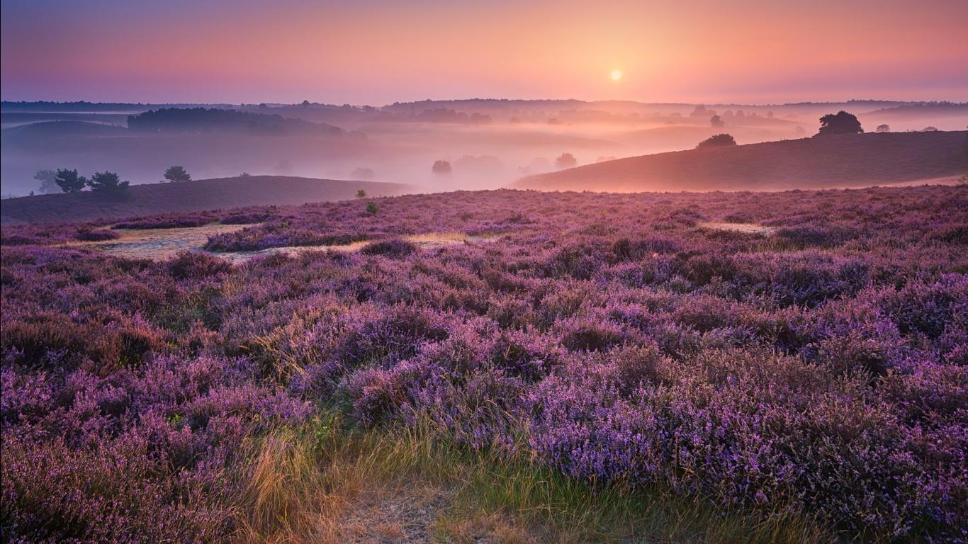Wallpapers Hd Widescreen High Quality Desktop 3d Purple Landscape Wallpapers Hd Wallpapers Id 24636
