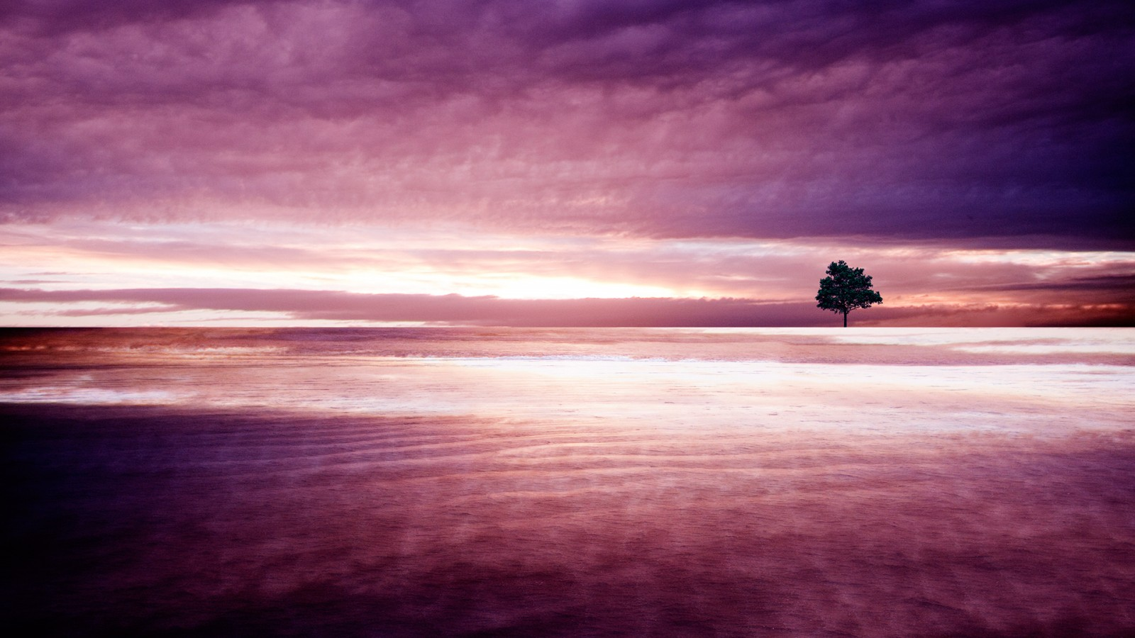 Live Photo Wallpaper Iphone X Purple Nature Wallpapers Hd Wallpapers Id 11890