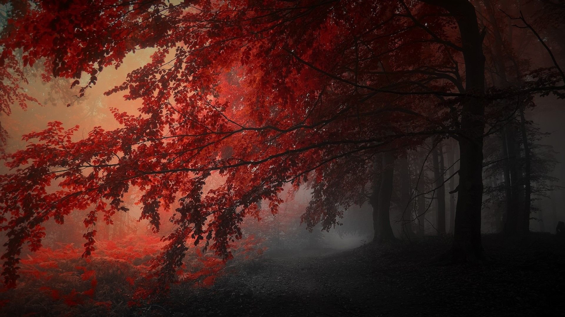Tons of awesome orange aesthetic pc wallpapers to download for free. Red Autumn Trees In The Forest HD Dark Aesthetic ...