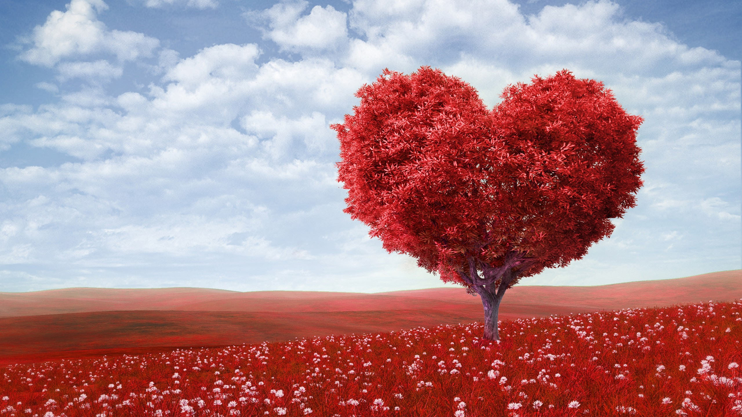 Fall Wallpaper Cute Red Love Heart Tree Wallpapers Hd Wallpapers Id 16776