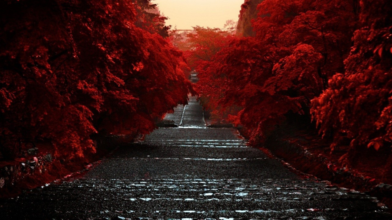 Are you in the market to buy a car in thomasville, ga? Road Between Red Autumn Trees HD Dark Aesthetic Wallpapers