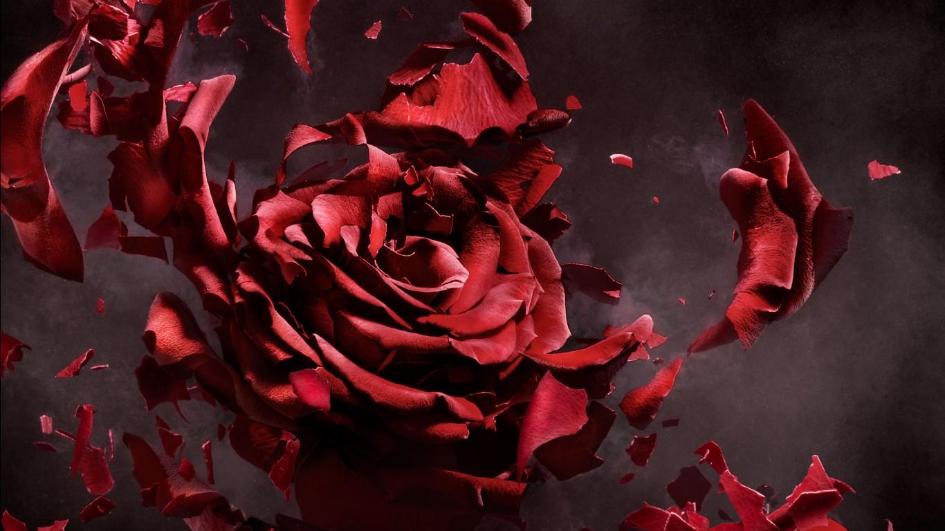 Cute Pink Iphone Wallpaper Hd Rose Flower Artwork Wallpapers Hd Wallpapers Id 28905