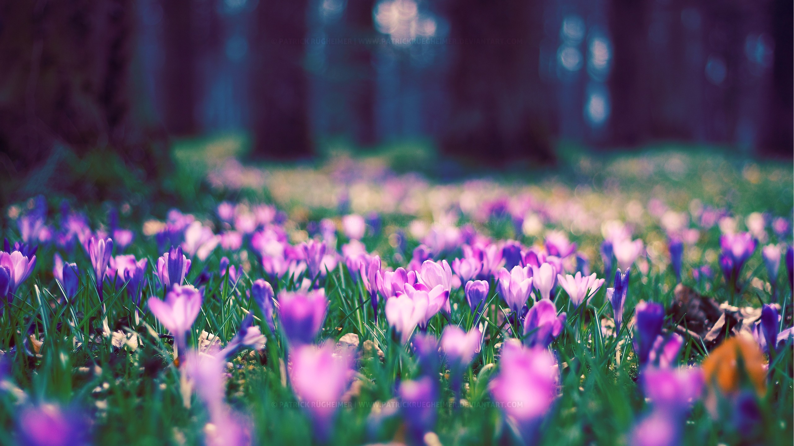 Wallpaper Blurry Iphone X Spring Flower Park Wallpapers Hd Wallpapers Id 12434