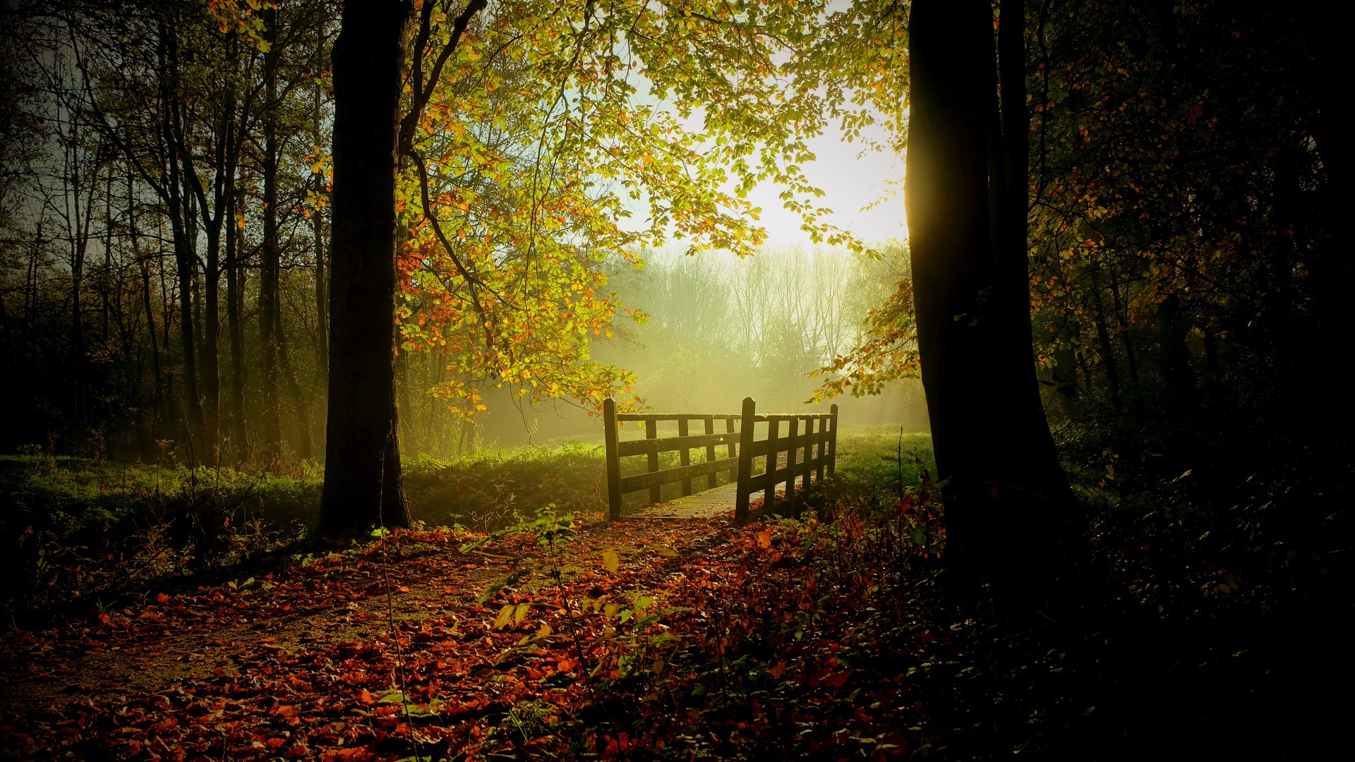 Fall Wallpaper For Laptops Sunny Fall Day Wallpapers Hd Wallpapers Id 18051