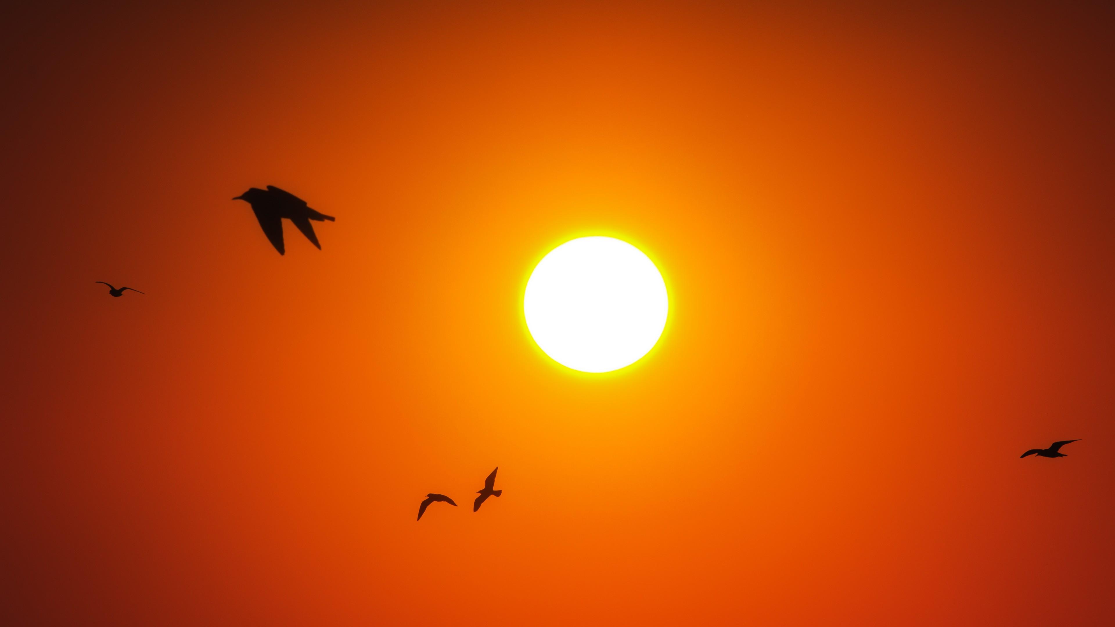 Iphone 5s Stock Wallpaper Sunrise Birds 4k Wallpapers Hd Wallpapers Id 18820