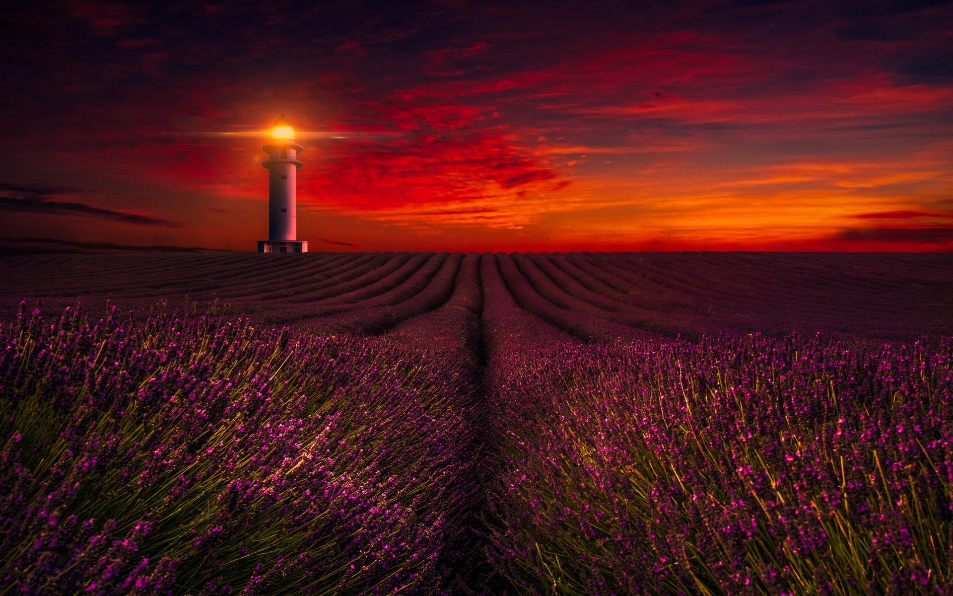 Fall Flowers Wallpaper Iphone Sunset Lavender Field Lighthouse 5k Wallpapers Hd