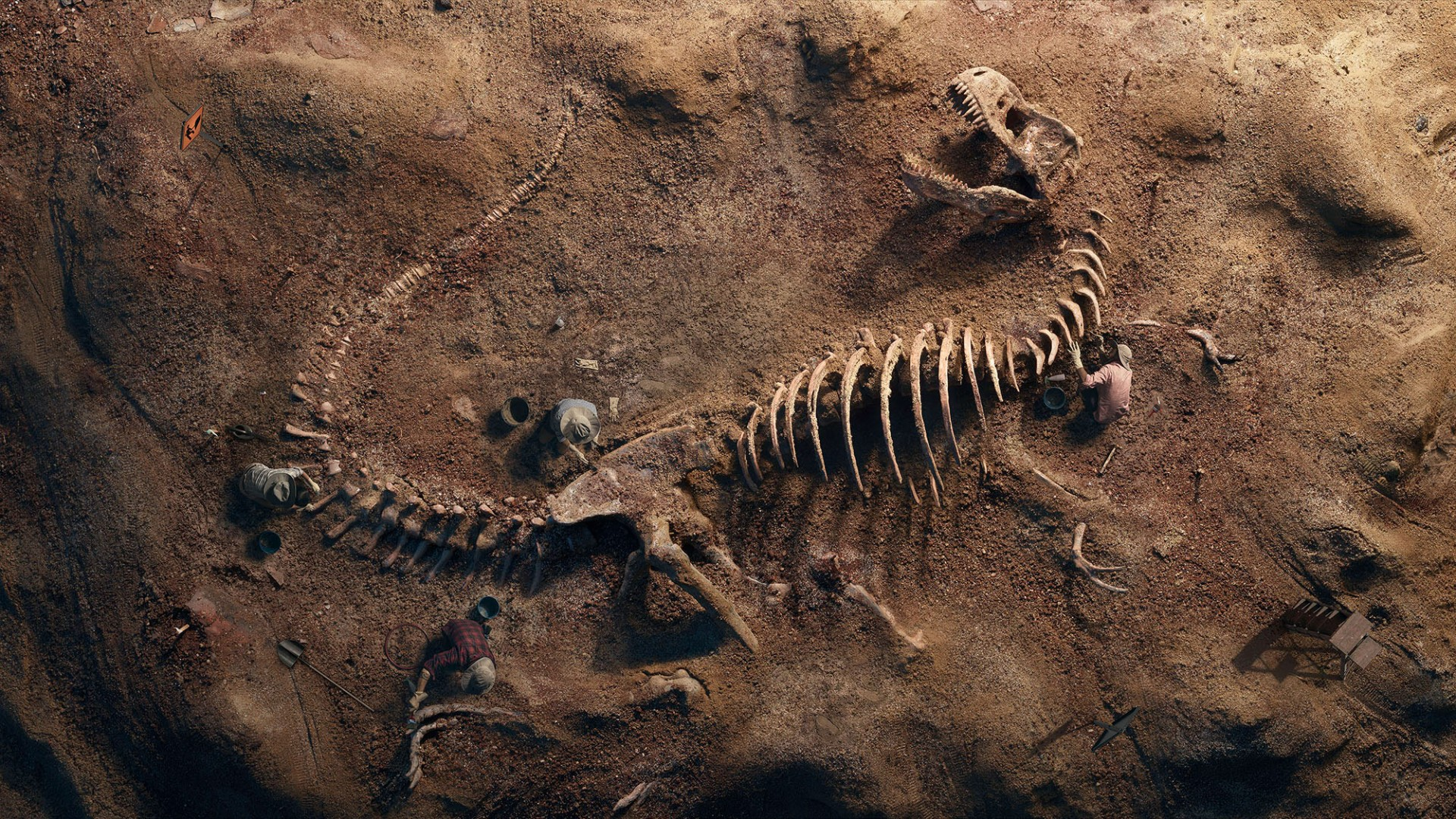 3d Full Hd Wallpaper For Android T Rex Fossil Wallpapers Hd Wallpapers Id 24770