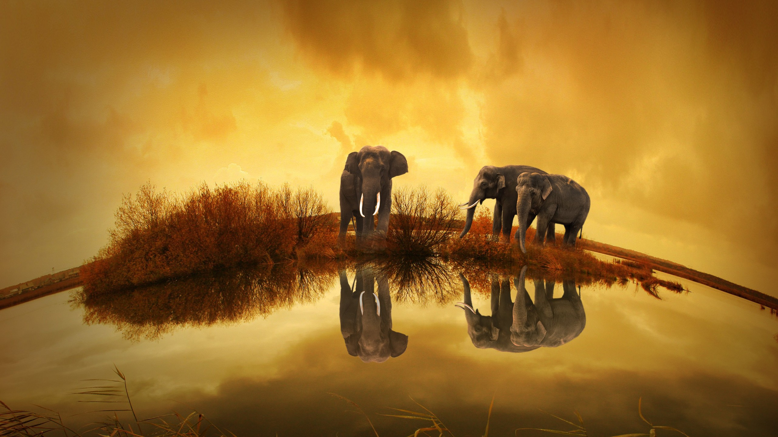 Cute Hd Wallpapers 1080p Thailand Elephants Wallpapers Hd Wallpapers Id 16694