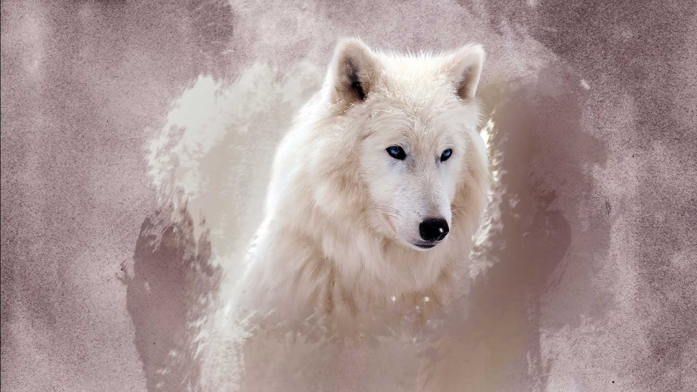 Lion Wallpaper For Iphone X The Wolf Wallpapers Hd Wallpapers Id 12164