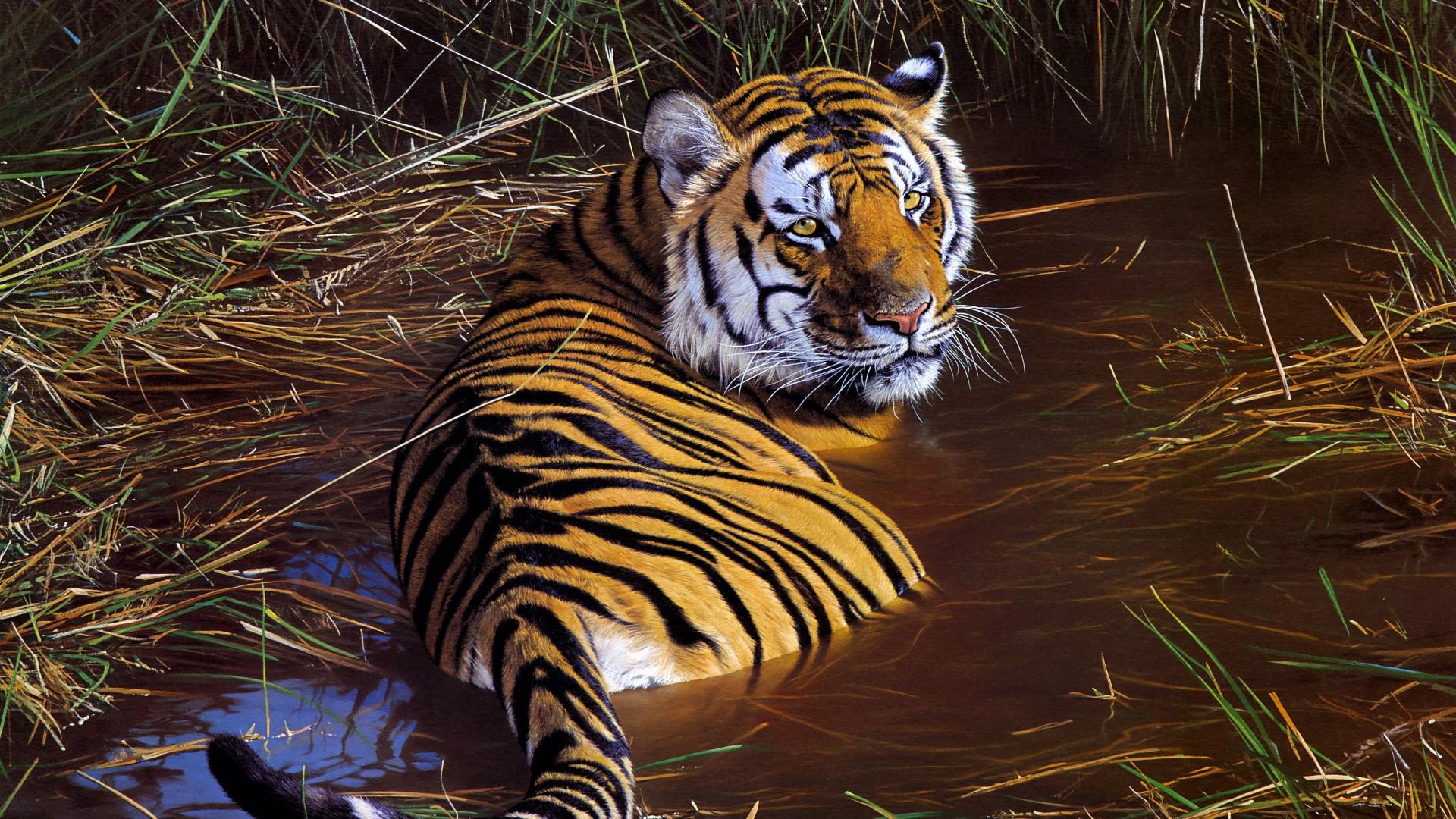 Leopard Wallpaper Iphone Tiger Wildlife Artwork 4k Wallpapers Hd Wallpapers Id