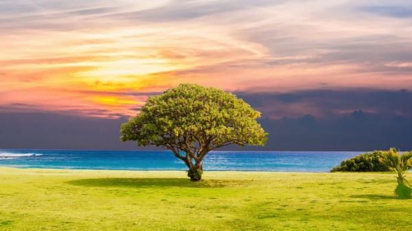 tree grass beach ocean landscape