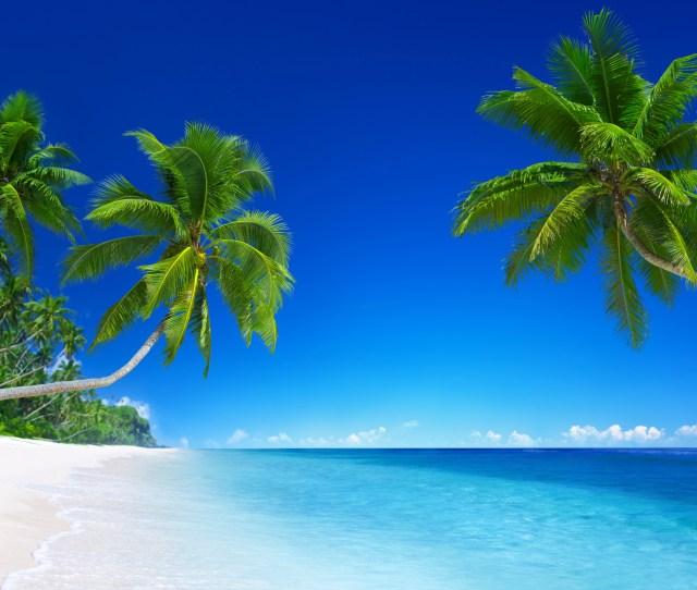 Tropical Beach Paradise K