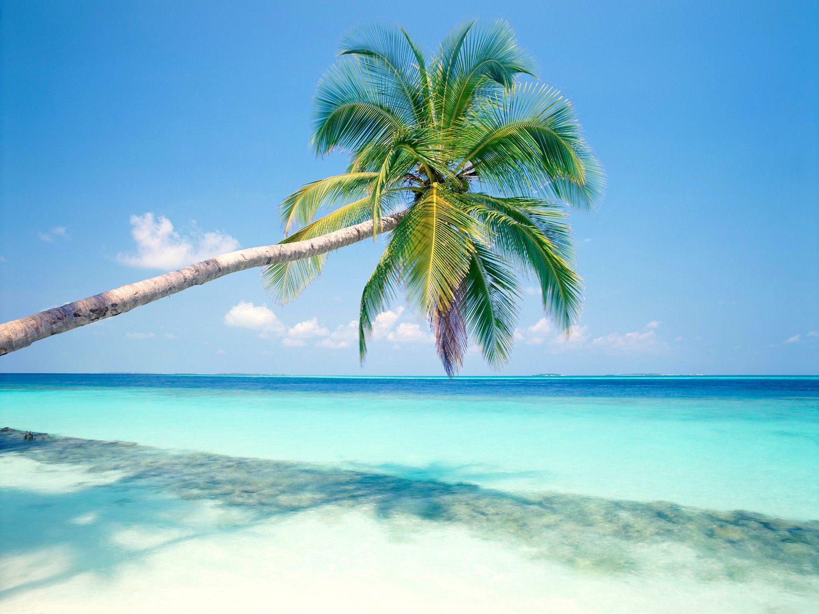 Hd Widescreen Christmas Desktop Wallpaper Tropical Island Wallpapers Hd Wallpapers Id 3739