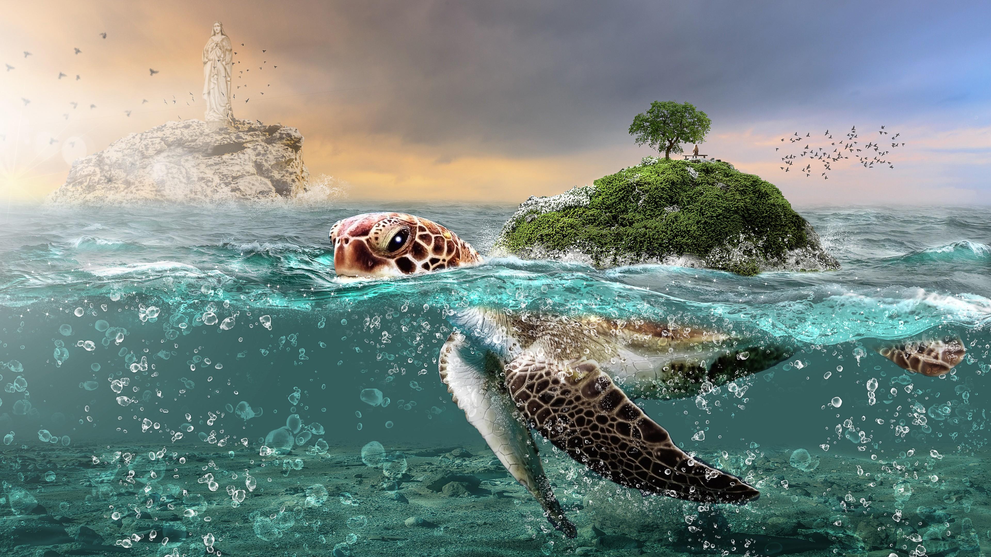 Cute Turtle Iphone Wallpaper Turtle Fantasy 5k Wallpapers Hd Wallpapers Id 27156