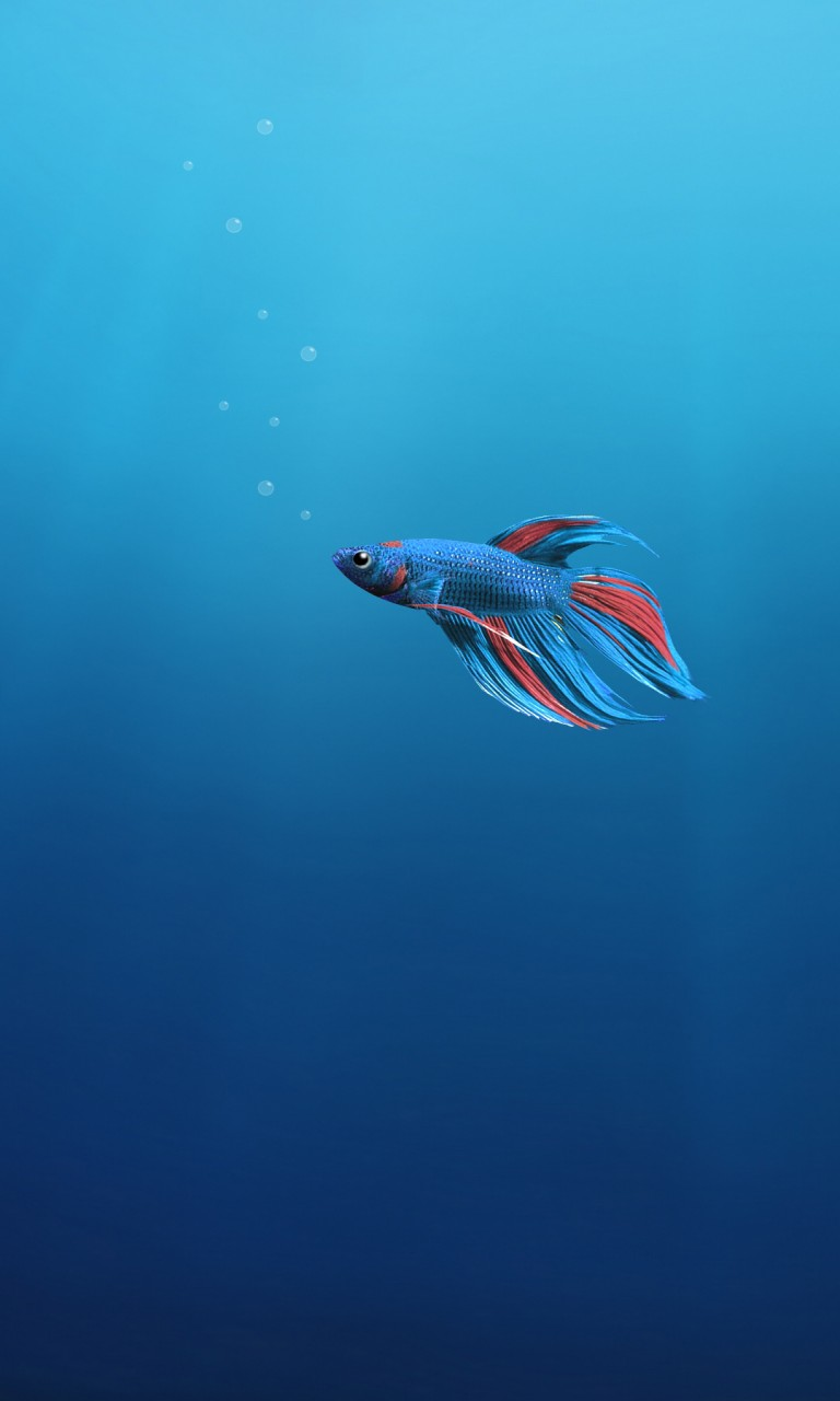 Iphone X Full Wallpaper Size Underwater Alone Fish 4k Wallpapers Hd Wallpapers Id