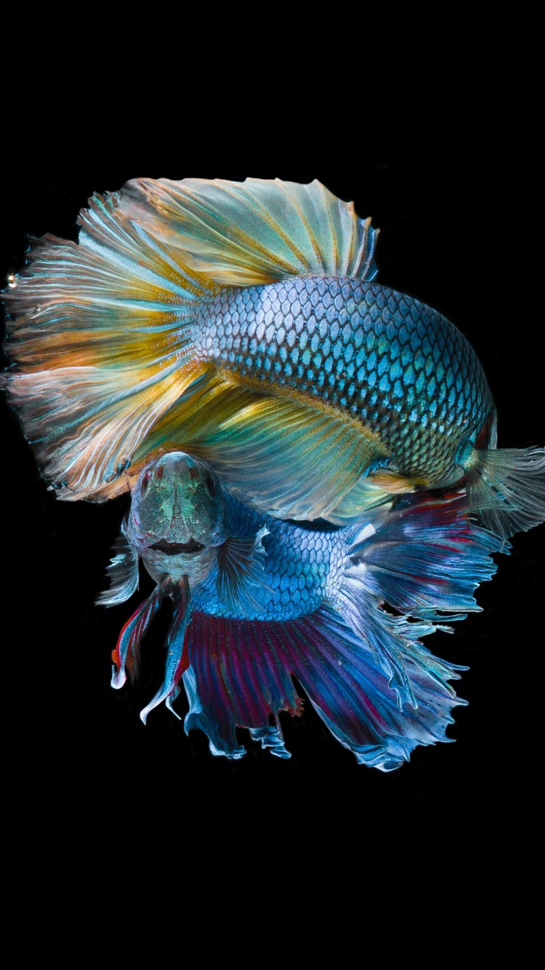 3d Fish Hd Live Wallpaper Underwater Fish 5k Wallpapers Hd Wallpapers Id 23678