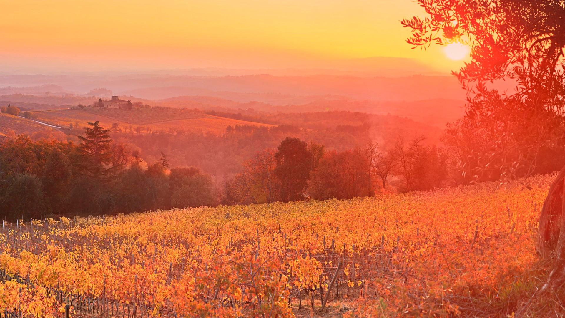 Free Widescreen Wallpaper Fall Vineyard Sunset Siena Tuscany Italy Wallpapers Hd