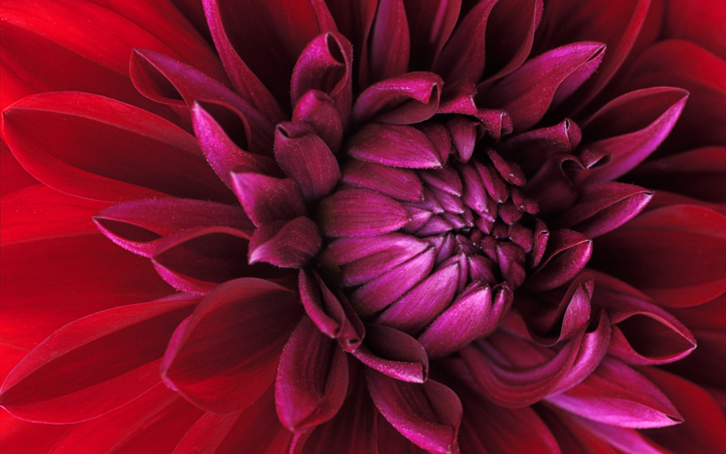 Wallpapers For Windows 7 Cute Windows 7 Flower Wallpapers Hd Wallpapers Id 5735