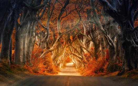 Bing Fall Desktop Wallpaper Autumn Forest Road 4k 8k Wallpapers Hd Wallpapers Id