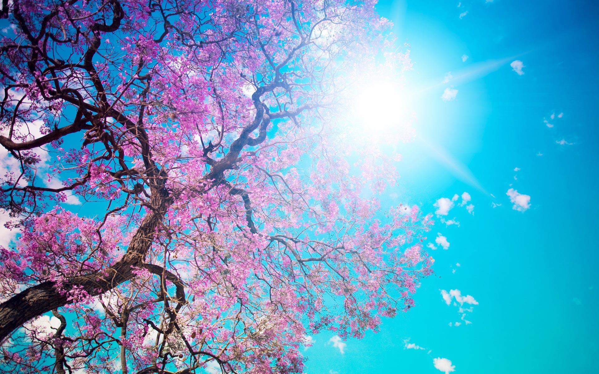 Iphone 5 Wallpaper Hd Retina Display Blooming Spring Wallpapers Hd Wallpapers Id 10620