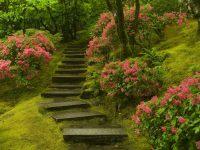 Japanese Garden Washington Park Wallpapers | HD Wallpapers ...