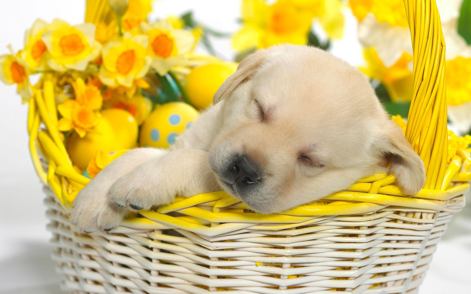 Cute Wallpapers For Springtime Springtime Snooze Wallpapers Hd Wallpapers Id 4985