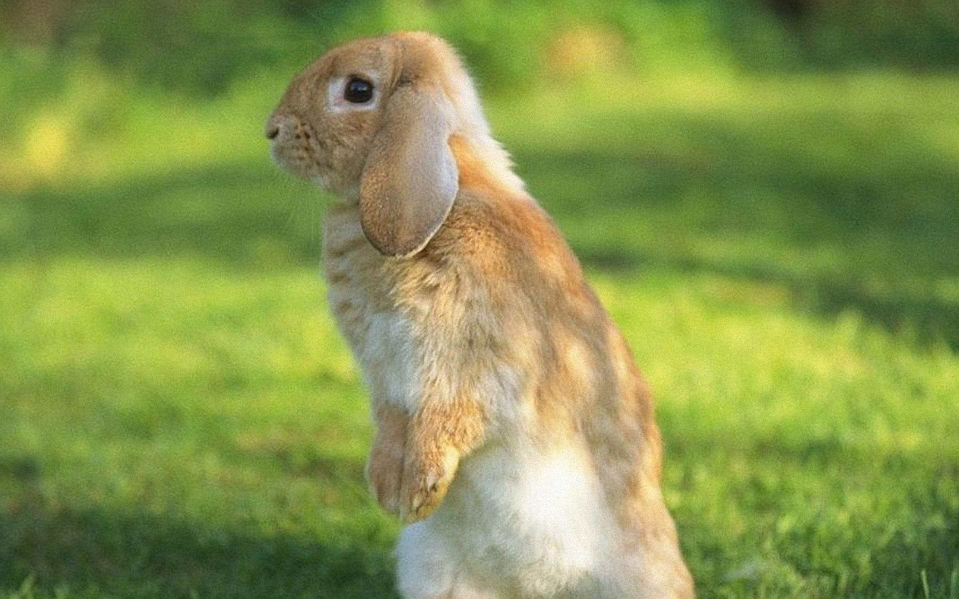 Cute Happy Teachers Day Wallpaper Rabbit 1080