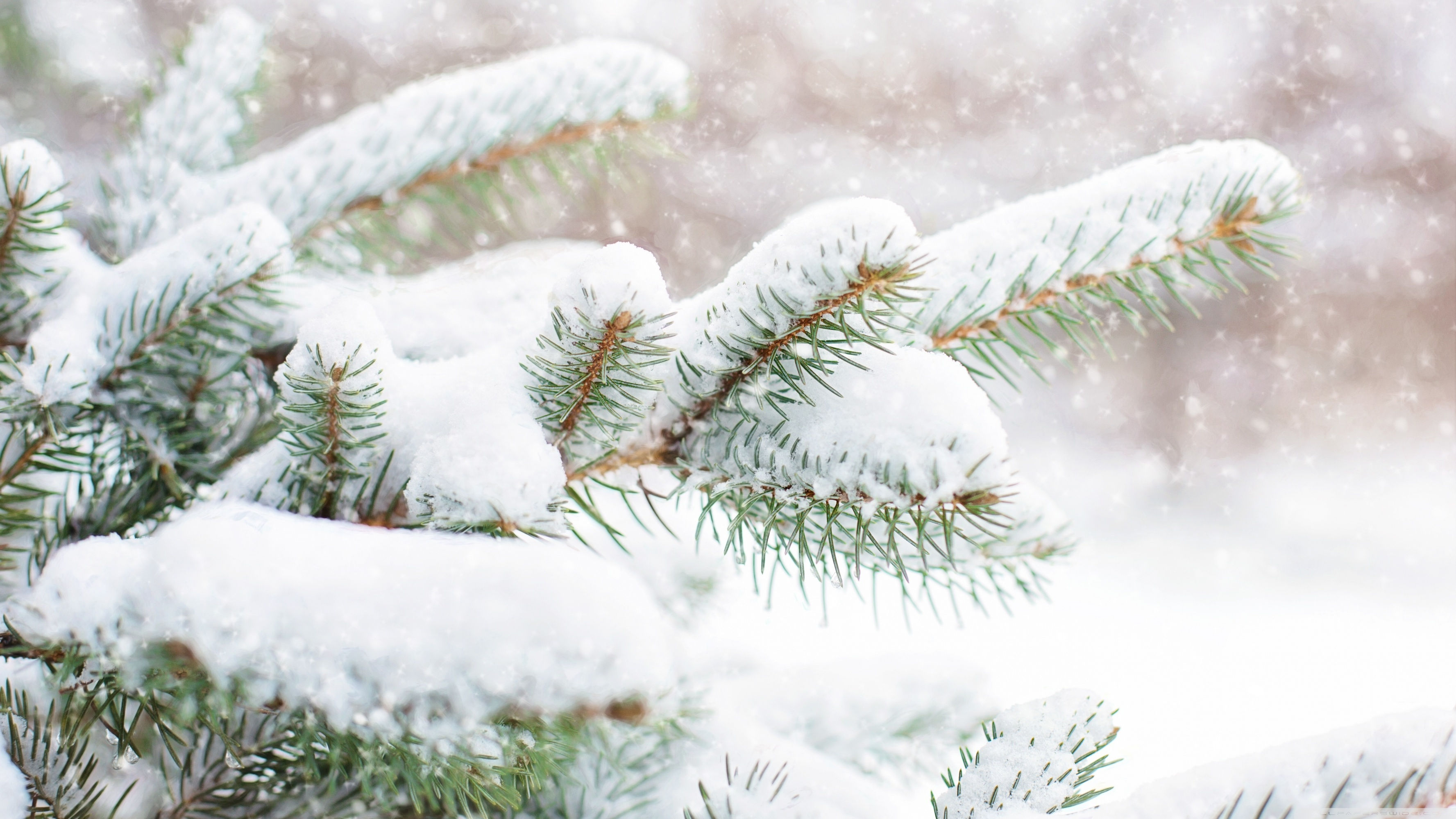Snow Falling Wallpaper For Ipad Snow Falling On Pine Trees Hd Wallpapers