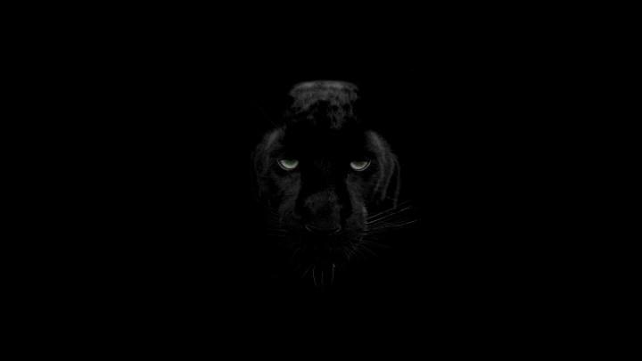 Black Panther Animal Ultra Hd Wallpaper Wallpapergood Co