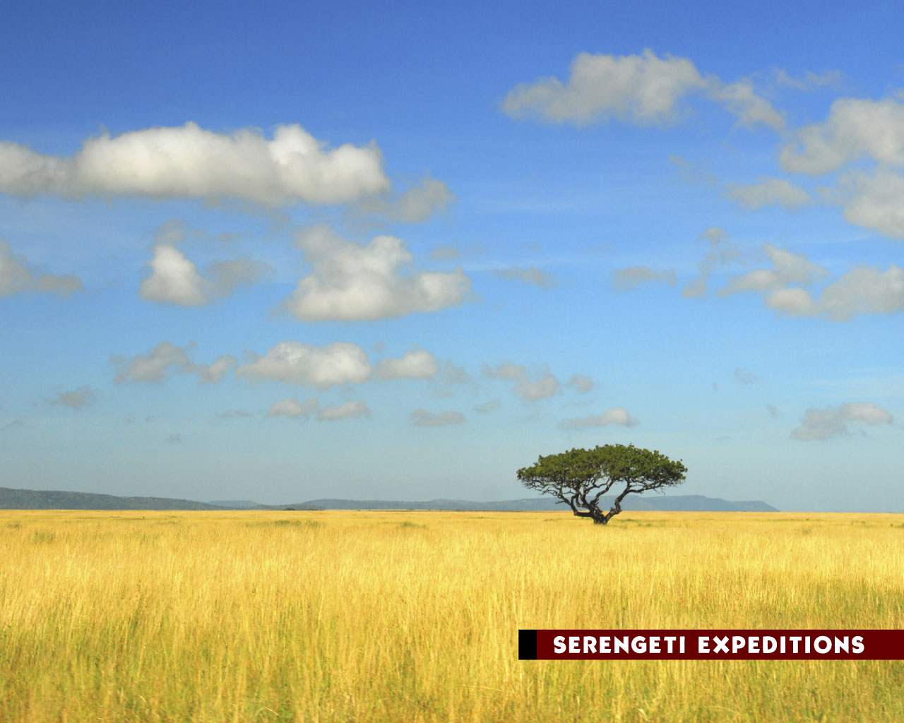 Awesome Quotes Mobile Wallpapers Serengeti Wallpaper National Park Serengeti Wallpaper 18545