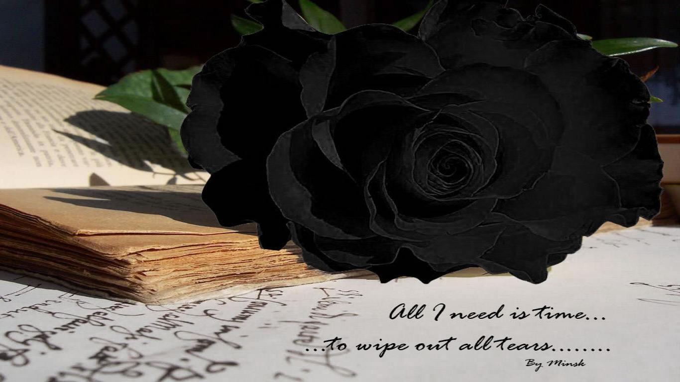 Black Rose Wallpapers Cute Black Rose Wallpapers Image