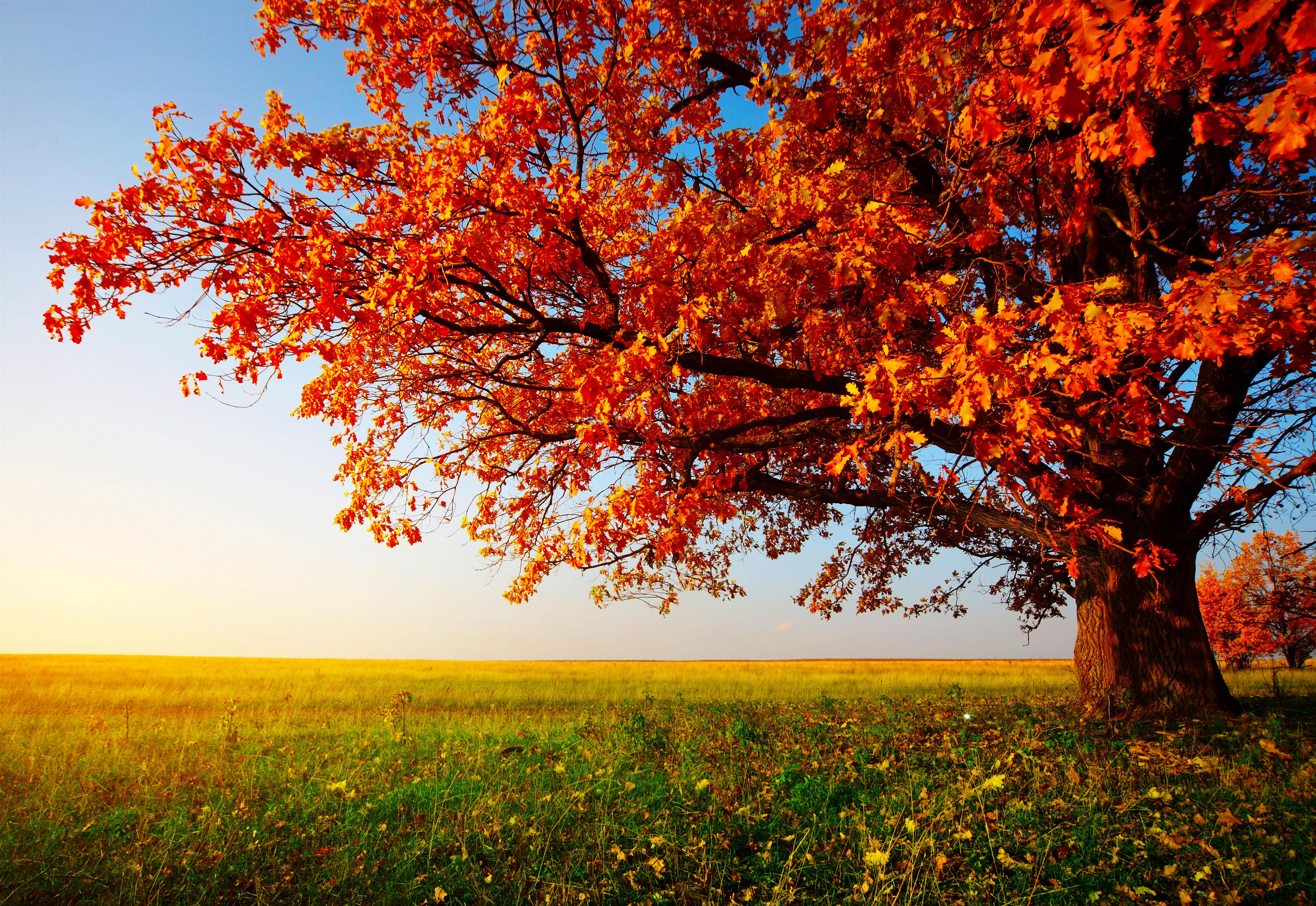 Wallpaper Images Of Fall Trees Lined Lake Autumn Tree Wallpaper Autumn Tree Wide Hd Wallpaper 21601