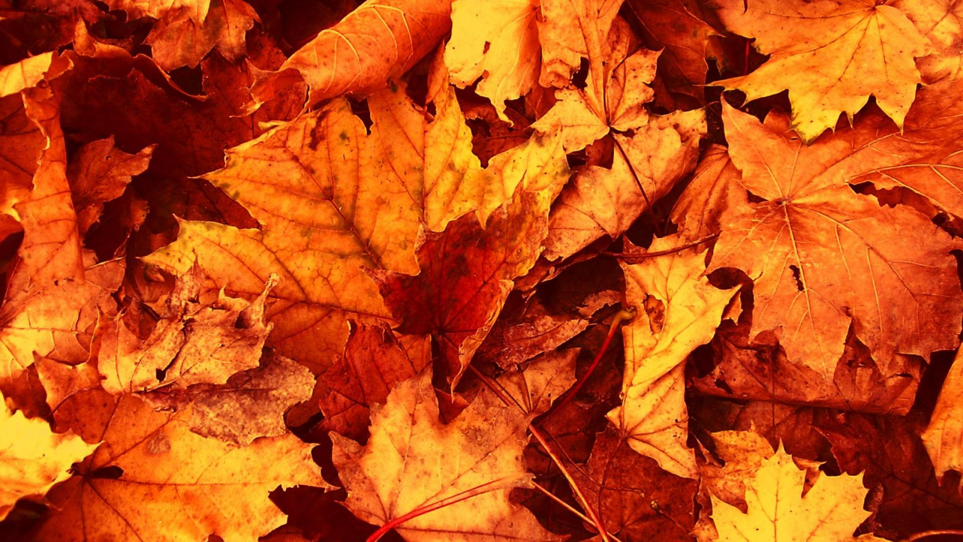 Fall Desktop Wallpaper Themes Autumn Leaves Wallpaper Awesome Natural Autumn Leaves