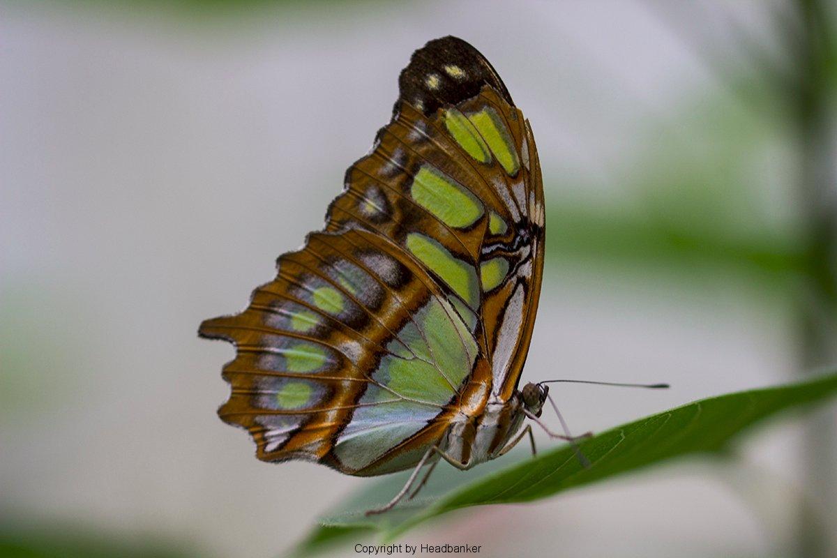 Garten Der Schmetterlinge – Headbanker's Foto Blog