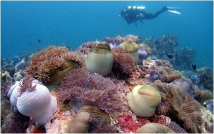 Scuba Diving in Tioman 1