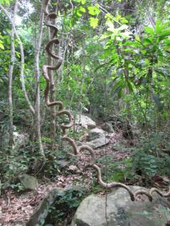 The Jungle Trail to the Dragon's Horns - The beginning from Mukut to Waking Dream