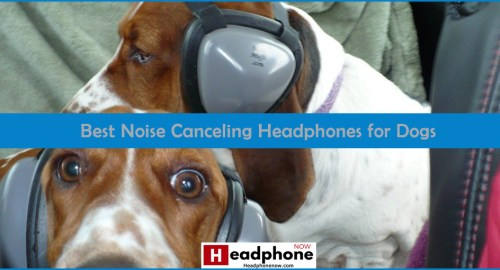 Best Noise Canceling Headphones for Dogs