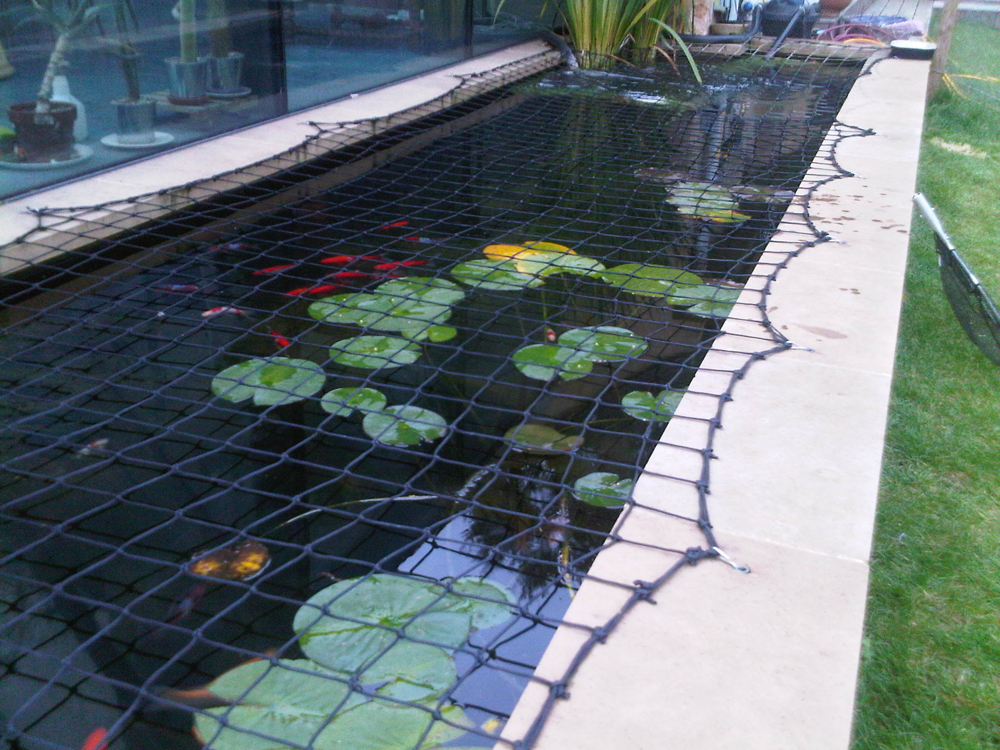 Garden Pond Plants Uk