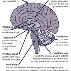 Left Side Brain Functions Diagram Fisher Plow Wiring About The | Headway