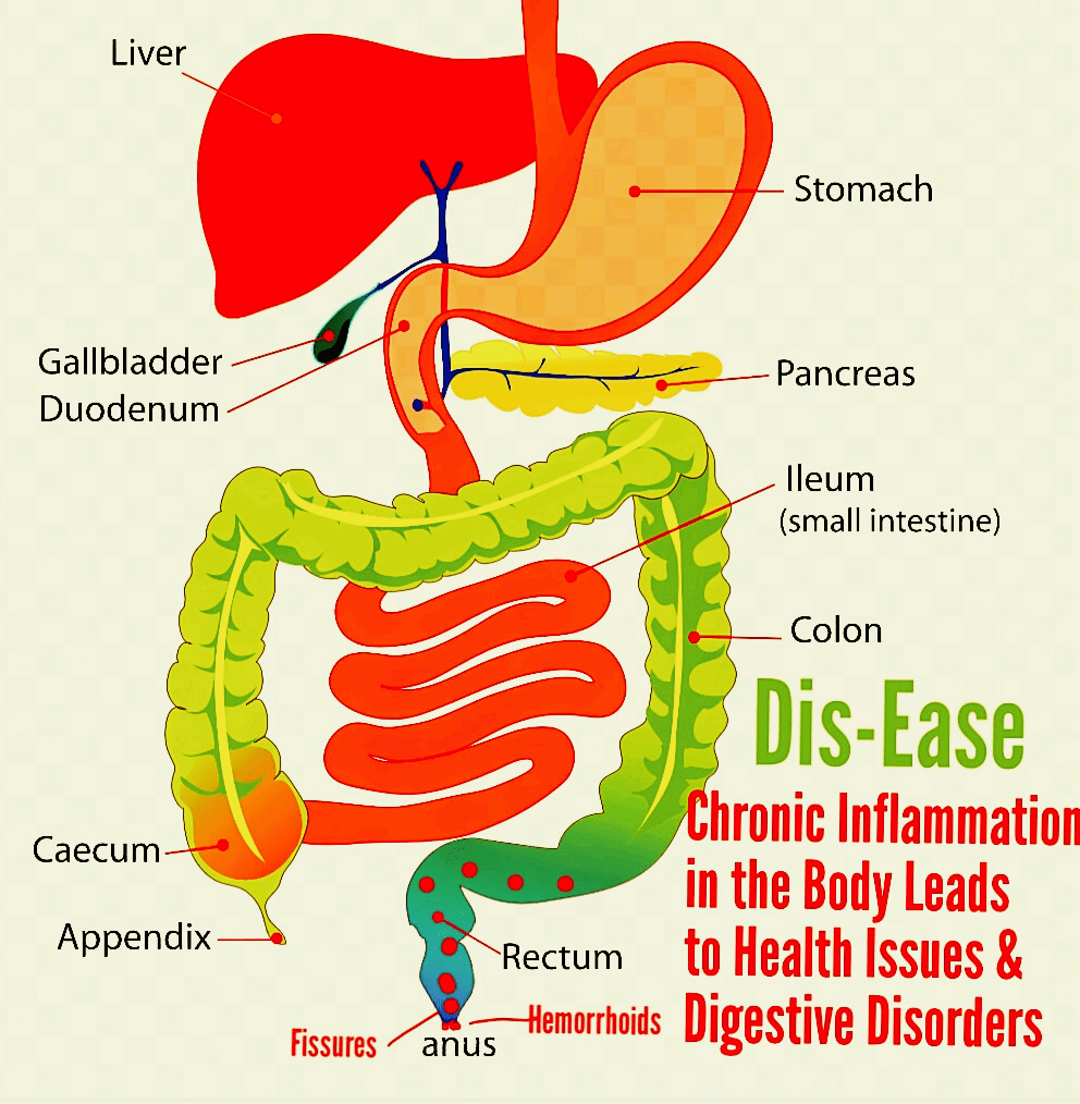 medium resolution of digestion tract diagram anal fissure hemorrhoids and stomach