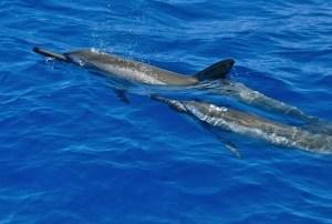 Dolphin at Kauai retreat Toby Christensen