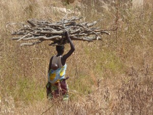 Tribal Woman taking wood home for cooking fires