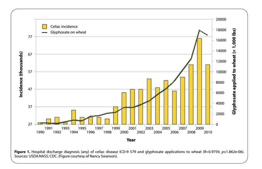 glyphosate-on-wheat