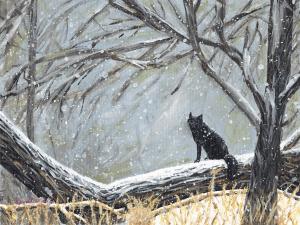 Red Fox in Black Phase by Karen T Hluchan
